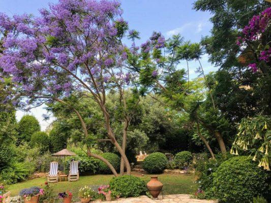 Veel soorten mediterrane bomen