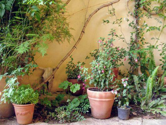 Bloempotten in de tuin bij Emel Pension